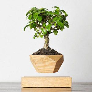 LevX Bonsai