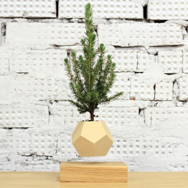 Купить левитиующую елку Кала в Москве, купить левитационную ель Коника в России. Левитирующие цветки Канадская ель, летающие кашпо.
