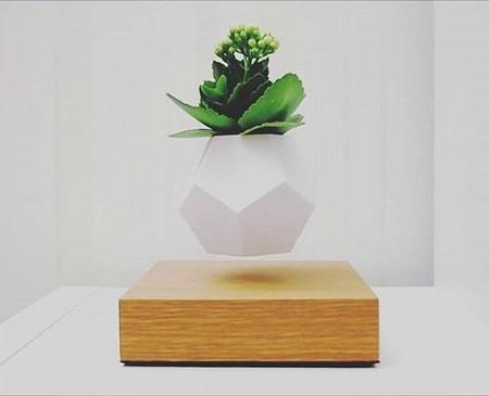 Купить левитирующий цветок в Москве, купить левитационное растение в России. Левитирующие цветки, летающие кашпо.
